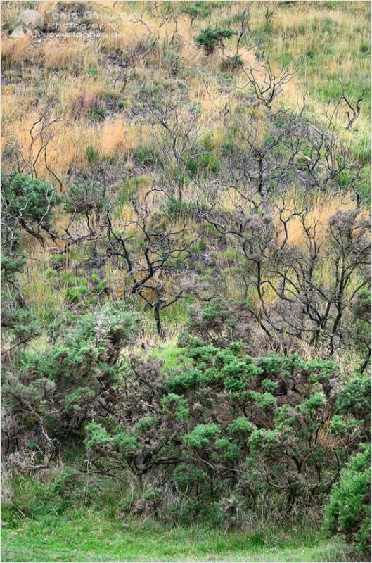 Dartmoor-1-529x800 in Dartmoor - mystisch und unwiderstehlich schön...