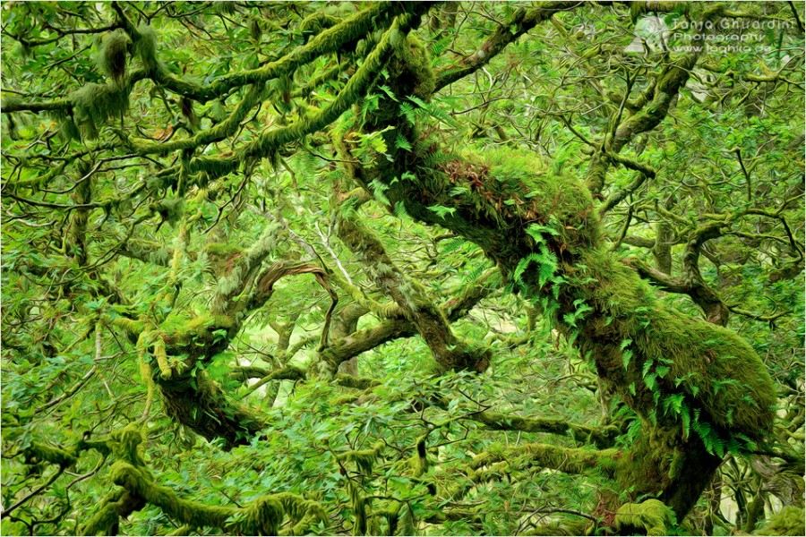 Dartmoor-4-900x600 in Dartmoor - mystisch und unwiderstehlich schön...