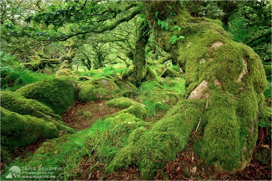 Dartmoor-5-900x600 in Dartmoor - mystisch und unwiderstehlich schön...