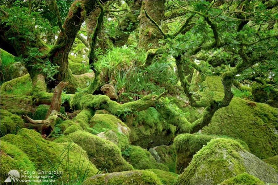 Dartmoor-6-900x600 in Dartmoor - mystisch und unwiderstehlich schön...