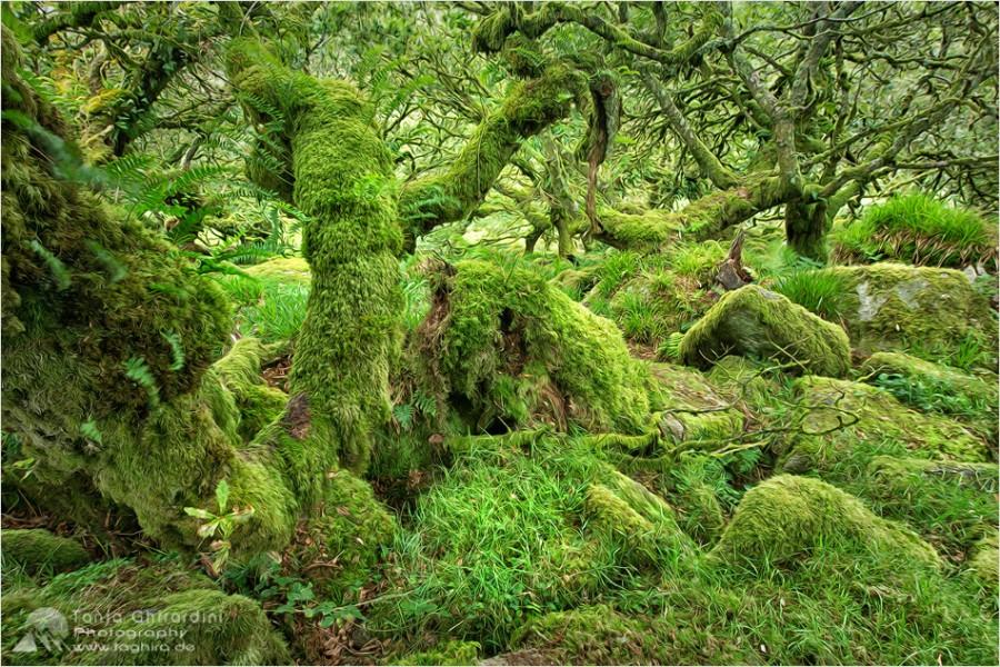 Dartmoor-7-900x600 in Dartmoor - mystisch und unwiderstehlich schön...