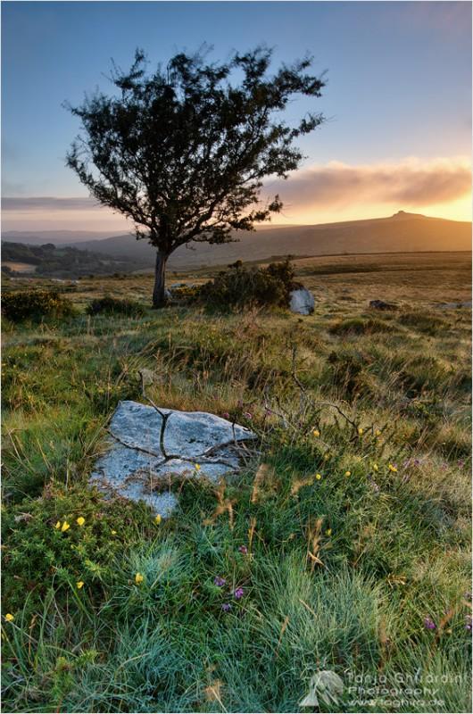 Dartmoor-8-530x800 in Dartmoor - mystisch und unwiderstehlich schön...
