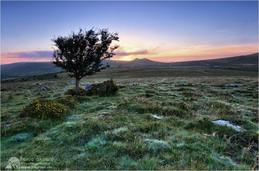 Dartmoor-9-900x596 in Dartmoor - mystisch und unwiderstehlich schön...